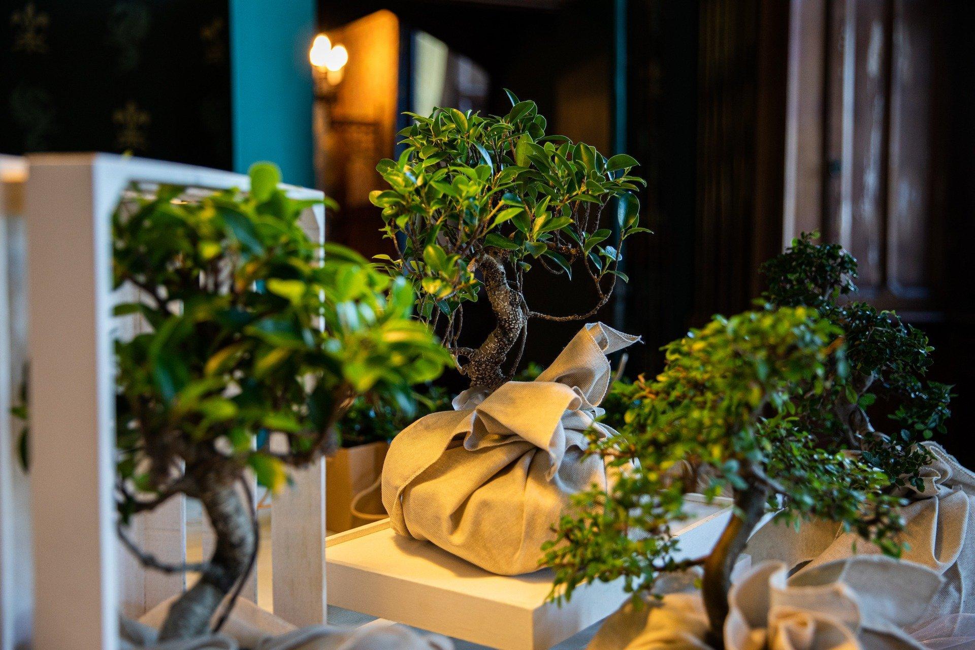 Matrimonio in di Verde e Arancione - Antonella Amato Wedding Planner_30